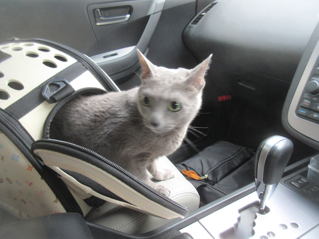 ロシ子と車の中で待機。