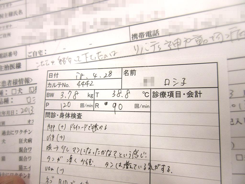 ロシ子の問診票。