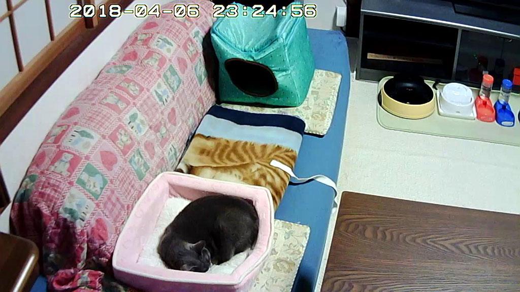 慶州のホテルで見たロシ子ちゃん。