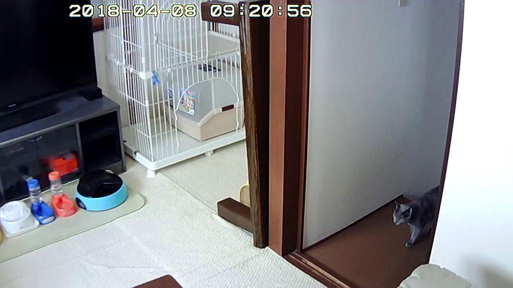 2階に上がって来たロシ子ちゃん。