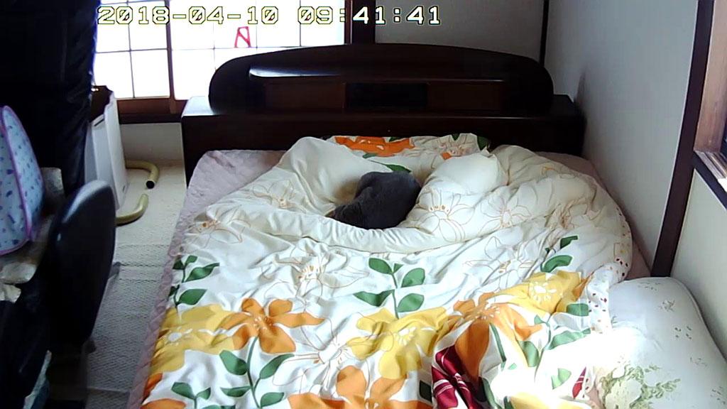 しっかりと寝てしまったロシ子。
