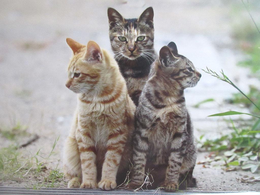親子の猫たち。