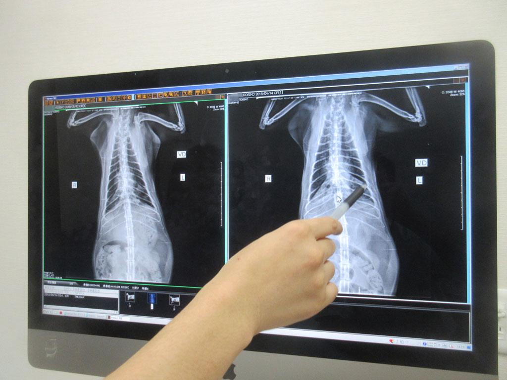 お腹側からのレントゲン写真。