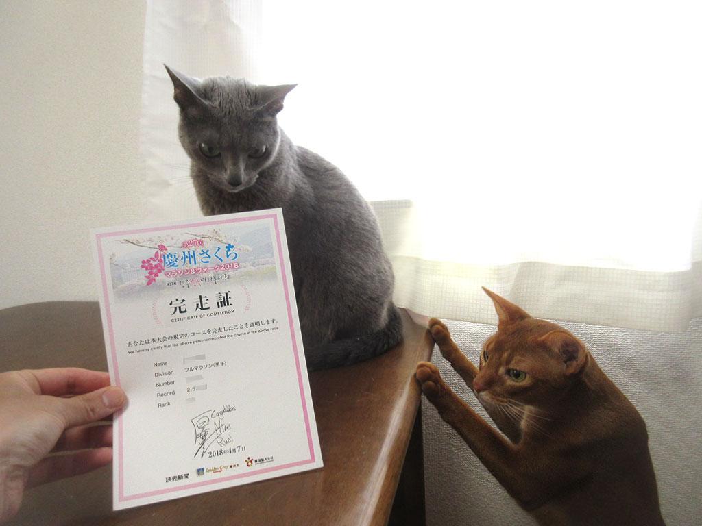 我が家の猫たちと完走証。