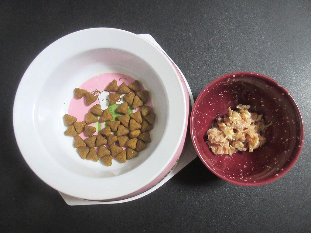 ロシ子の晩ご飯。