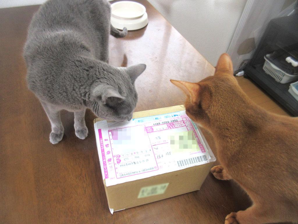 猫たちがやって来た。