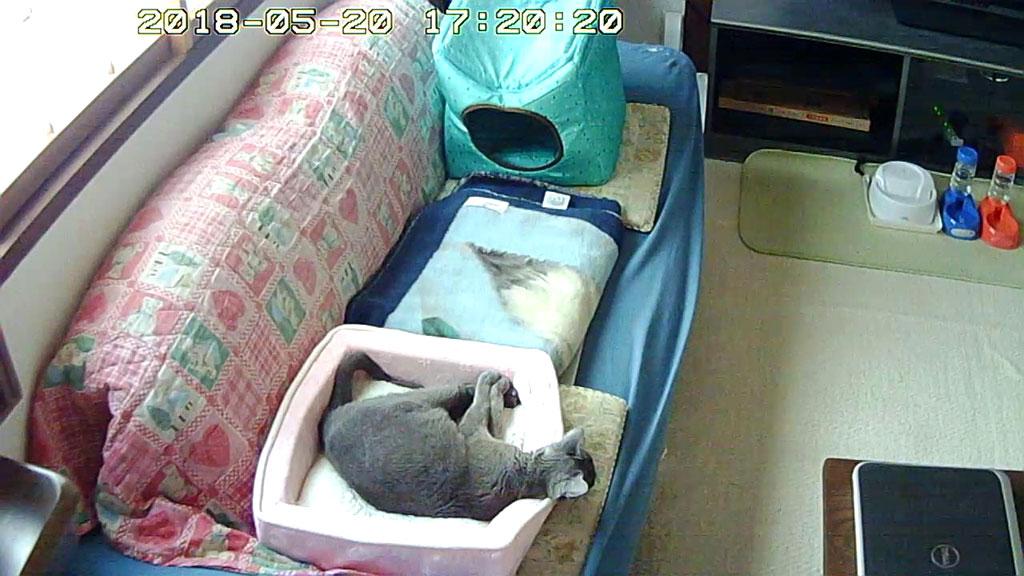 ロシ子の不安な寝方。