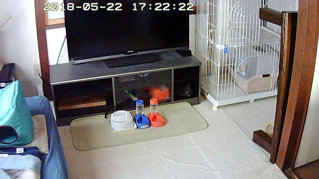 テレビ台の棚の中のロシ子。