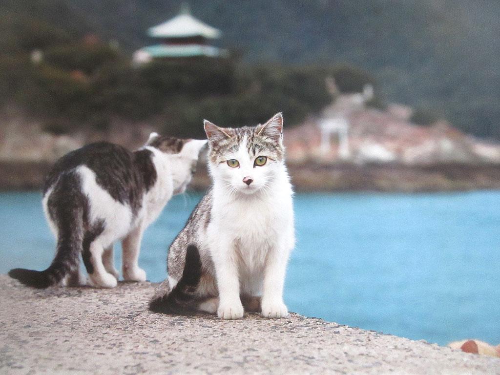 広島県の猫ちゃん。