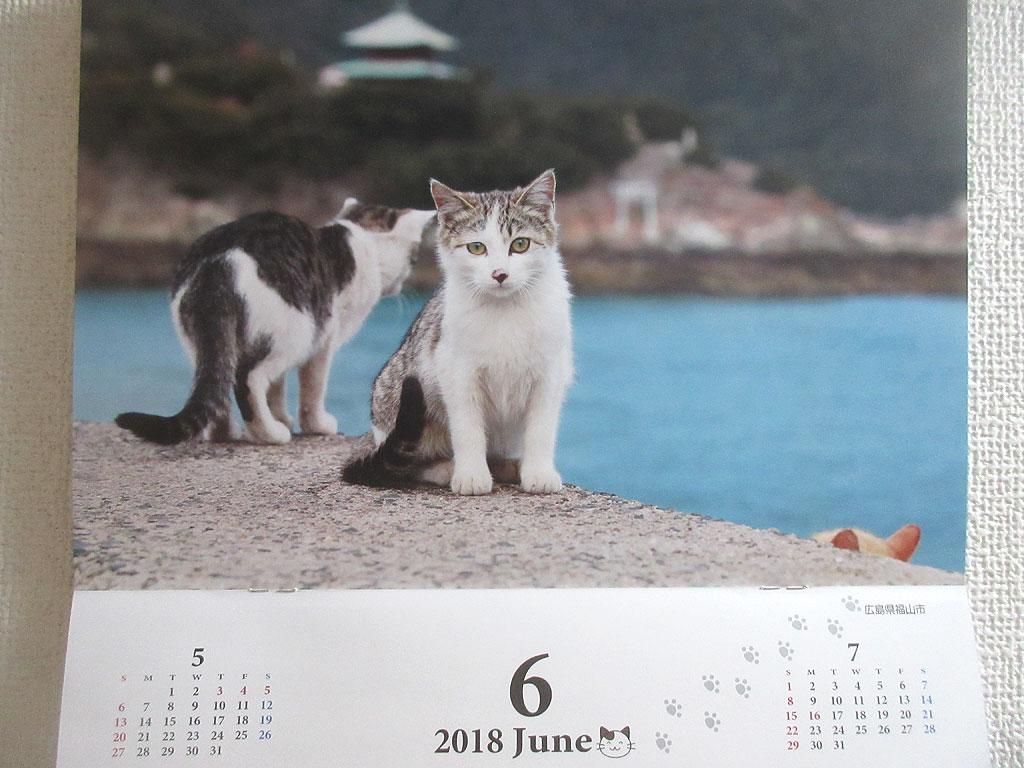 6月の猫ちゃん。
