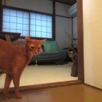 地震の後の我が家の猫たち。