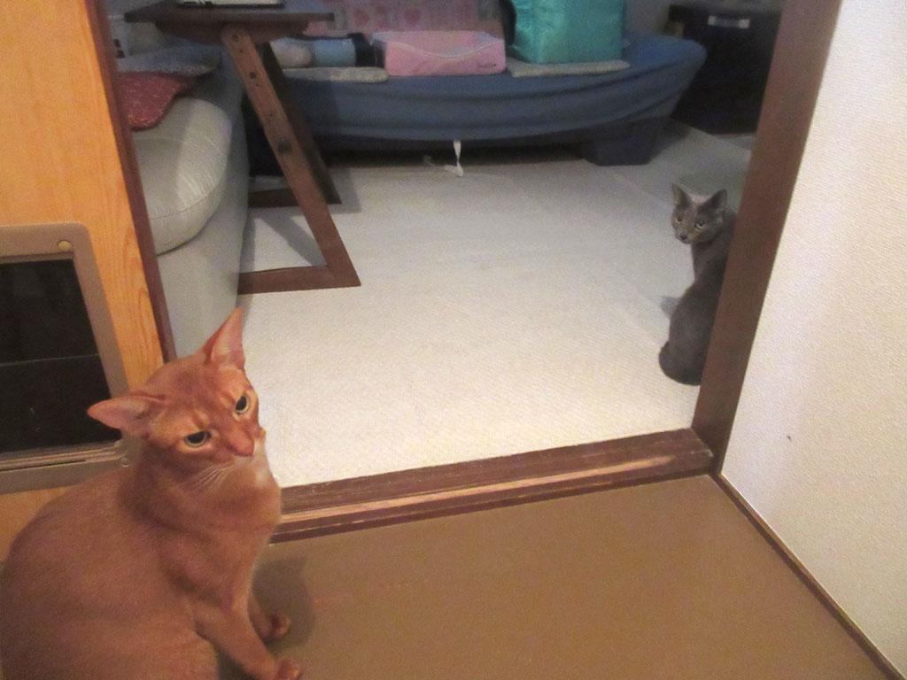 ビックリしていた我が家の猫たち。