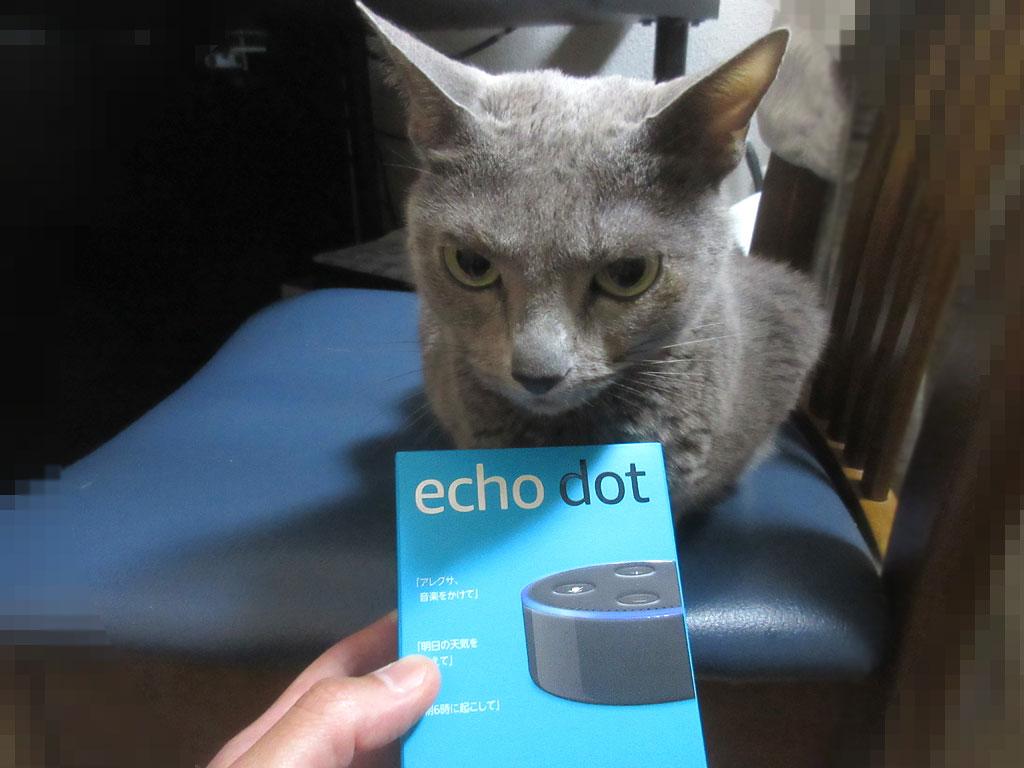 ロシ子と2台目のEcho Dot。