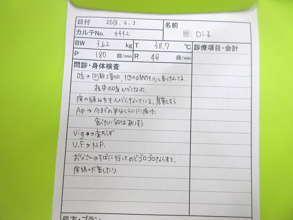 ロシ子の健康診断、ヒアリング。