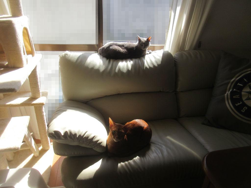 家の中での猫たちの様子。