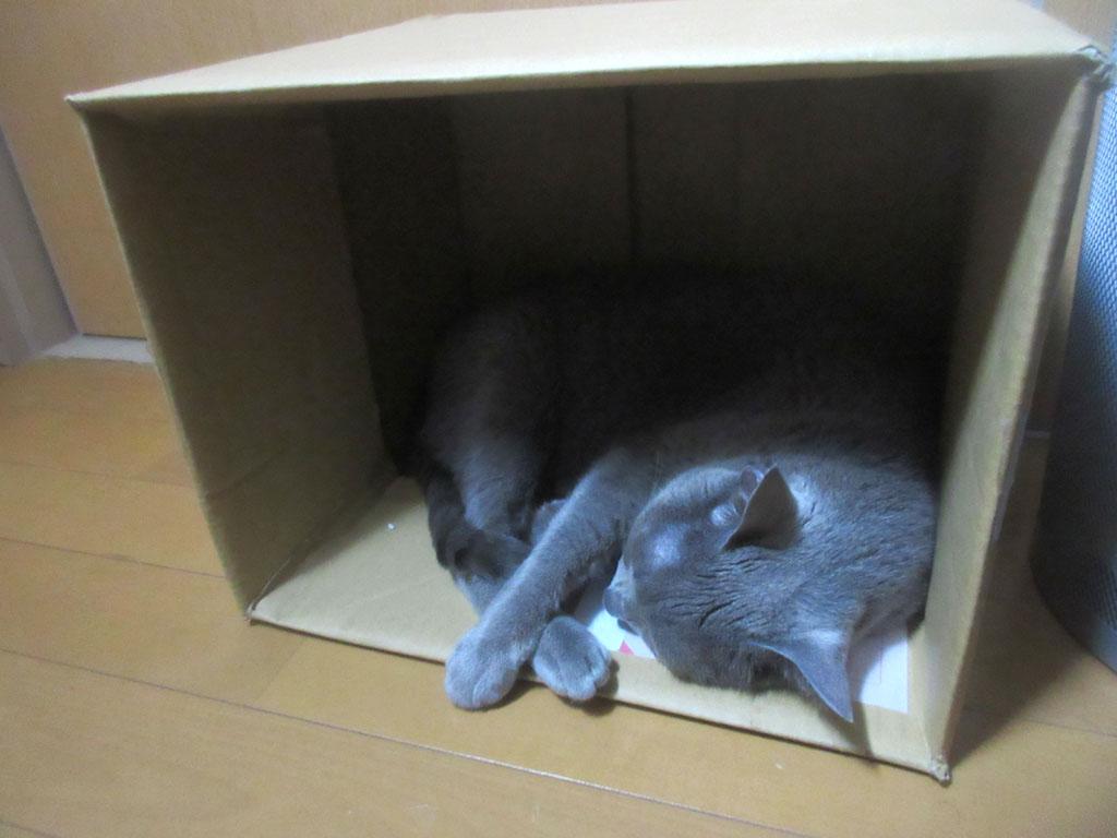 ロシ子にゆっくり休んで欲しい。
