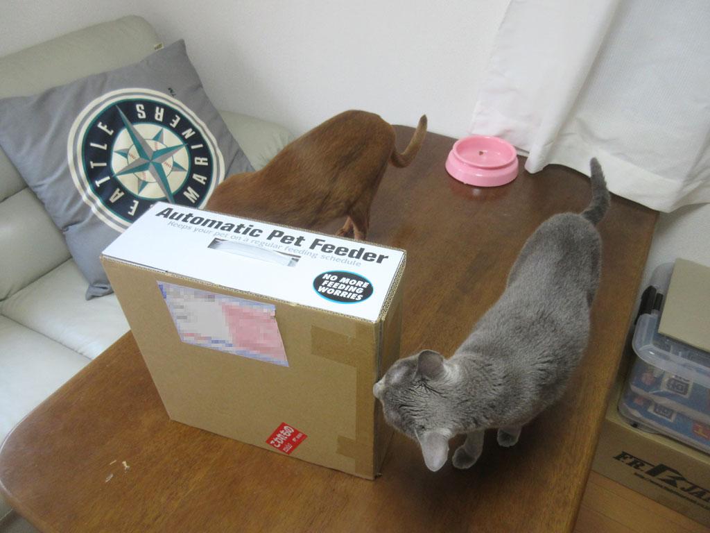 ロシ子の新しい自動給餌器。