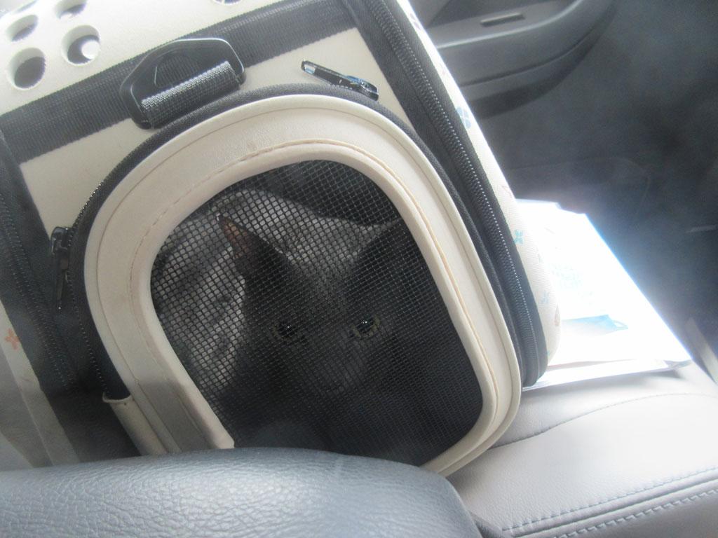 車の中でのロシ子ちゃん。