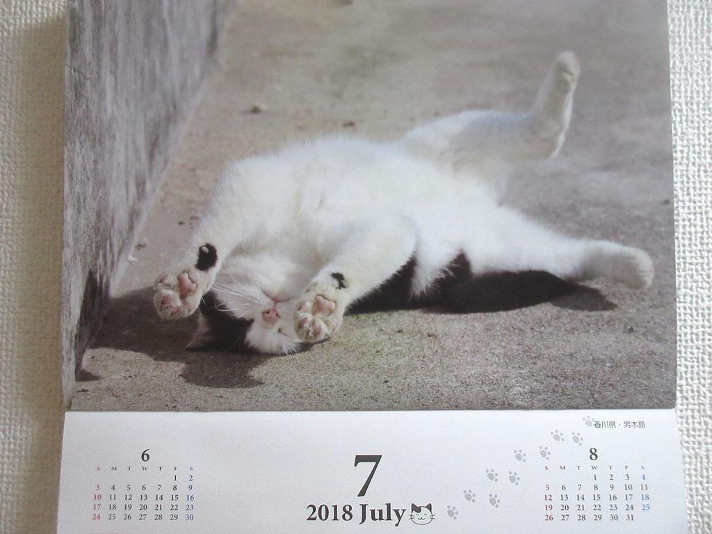 猫カレンダーの猫ちゃん。