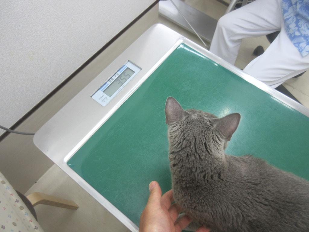 ロシ子の体重測定。