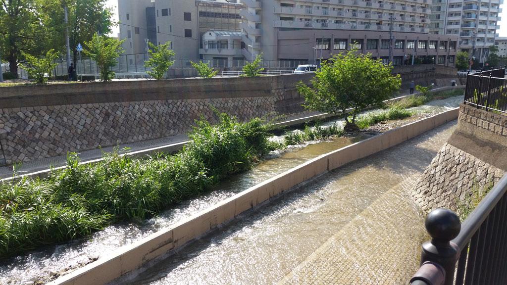 冠水の原因は土砂の堆積。