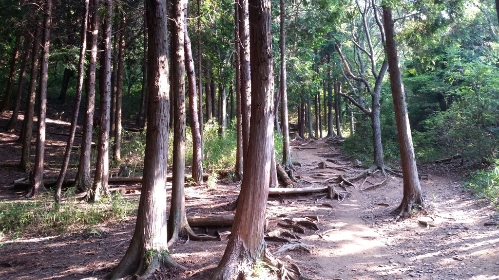 六甲山の木々。