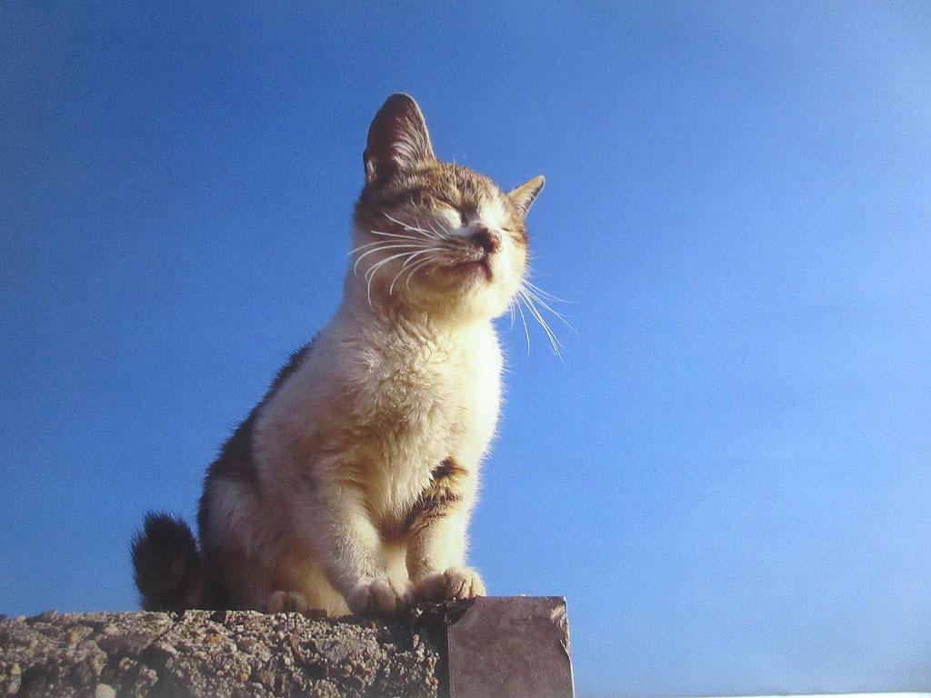 香川県佐柳島の猫ちゃん。