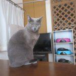 美猫なロシ子ちゃん。