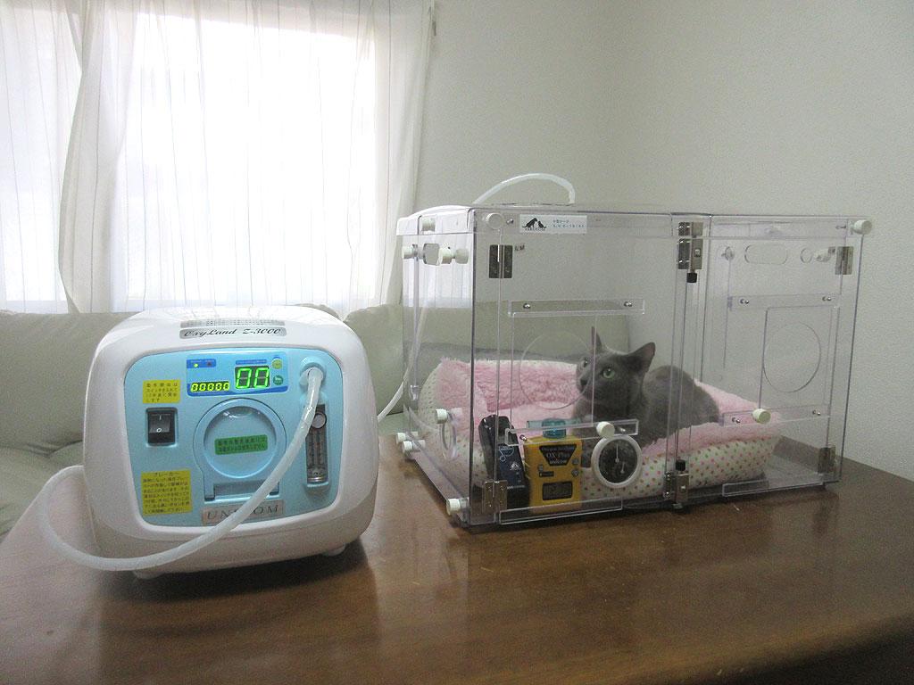 酸素濃縮器をオン。