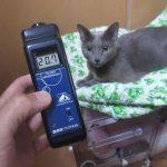 新しい酸素濃度計。
