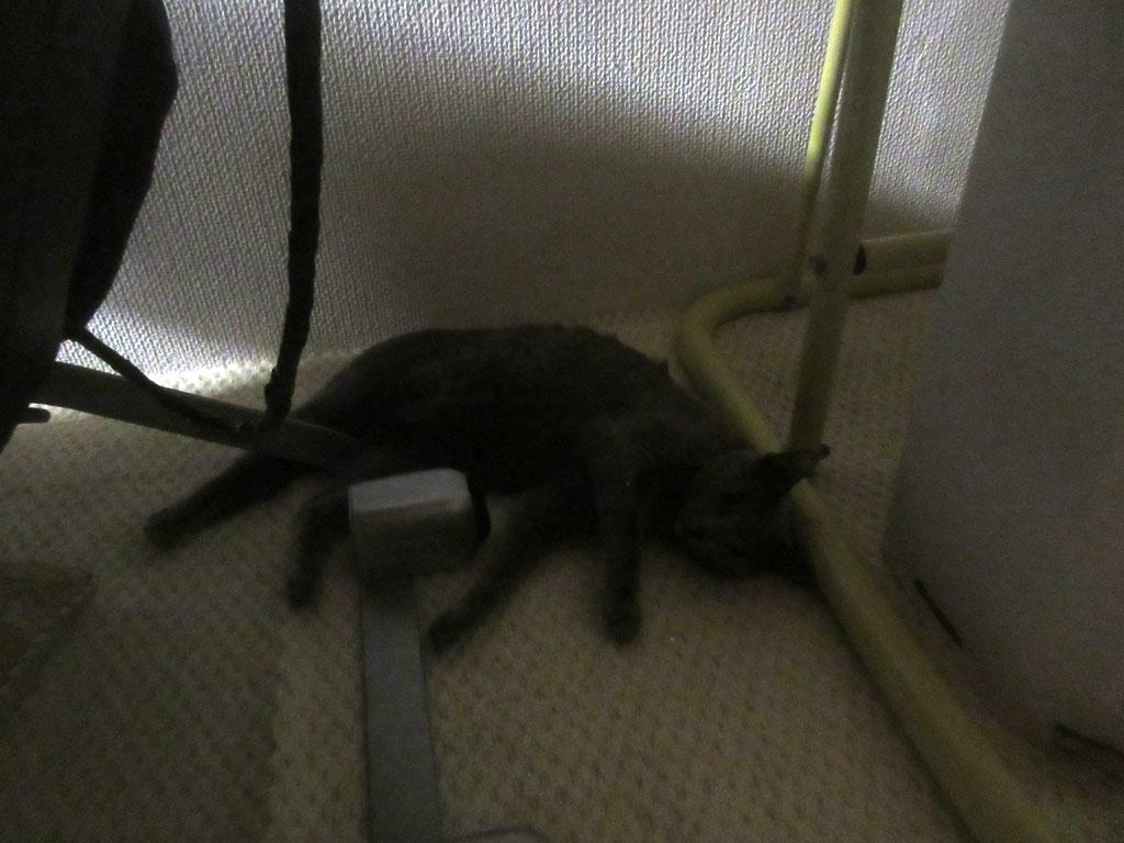 倒れる様に寝ているロシ子。