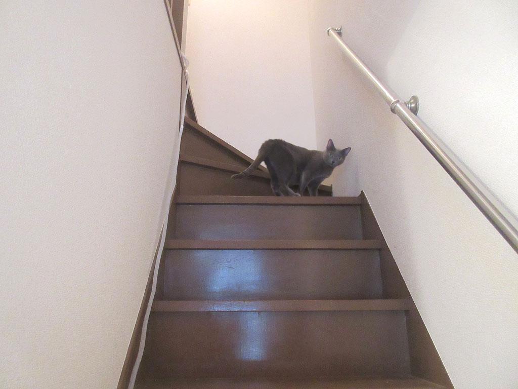 階段の上り口の所のチューブ。