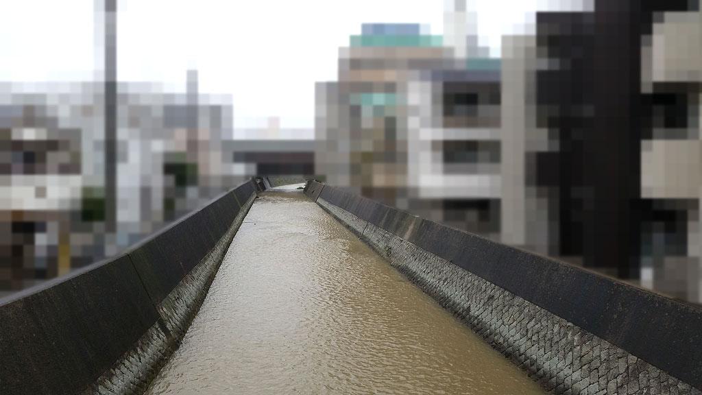 我が家の向かいの川の写真。
