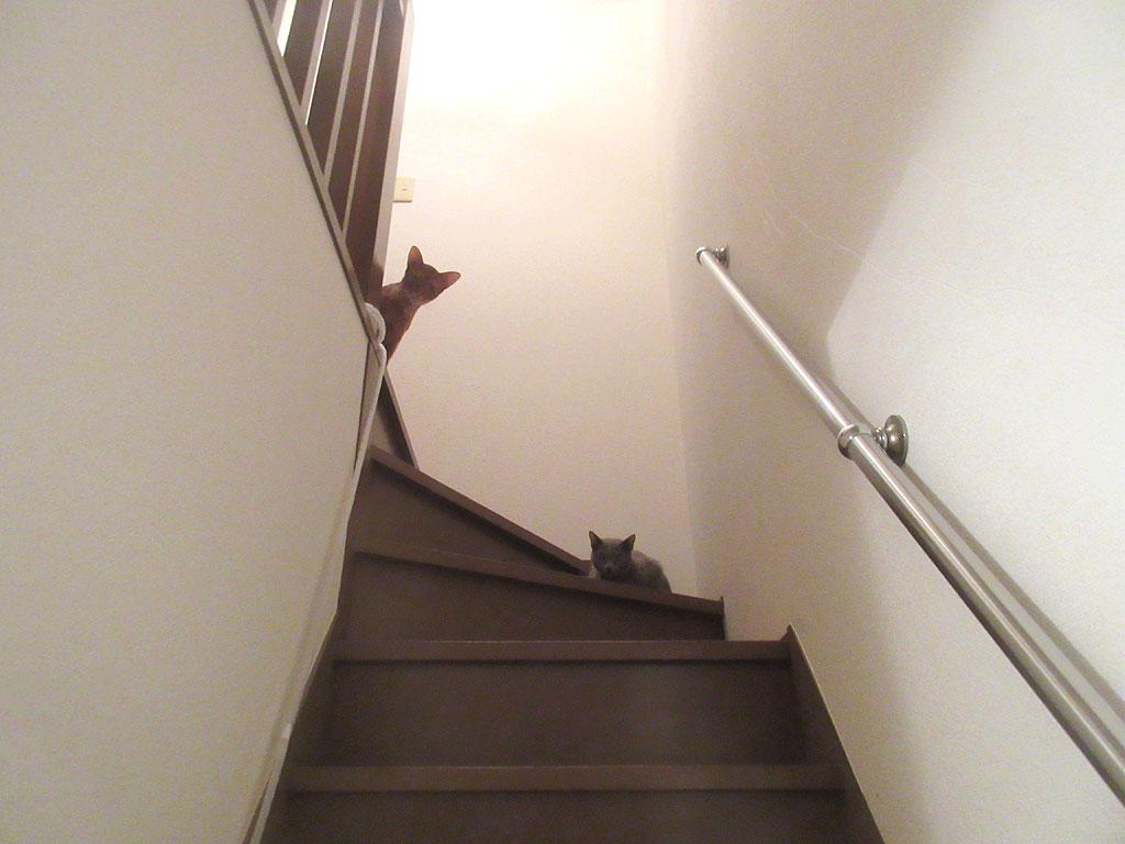 笑える猫たち。
