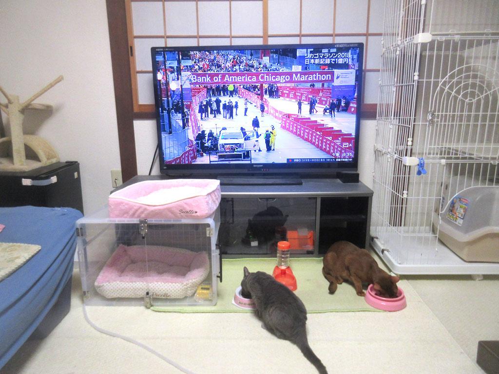 ご飯を食べる猫たち。