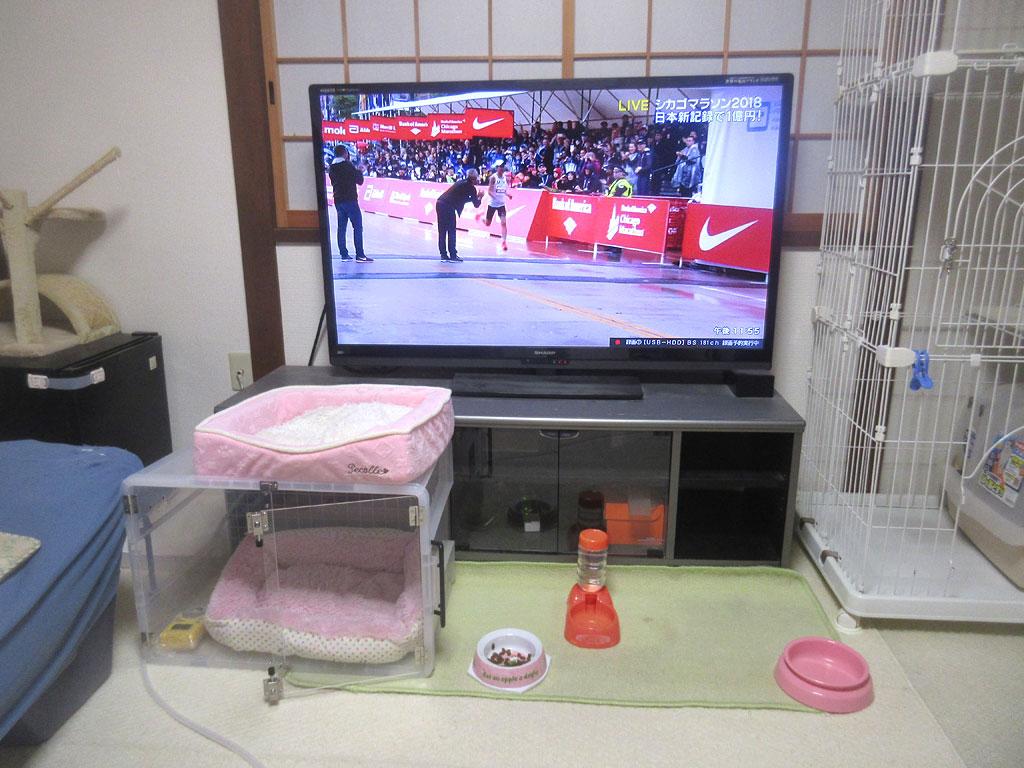 大迫選手が日本新記録。