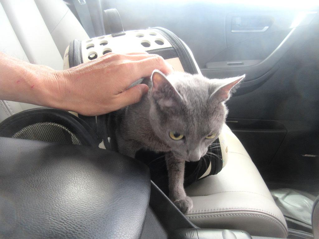 帰りの車の中のロシ子ちゃん。