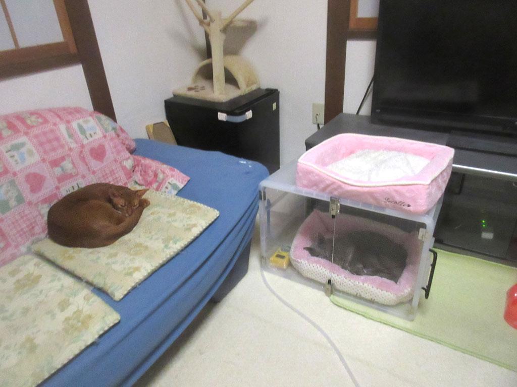 朝5時の猫たち。