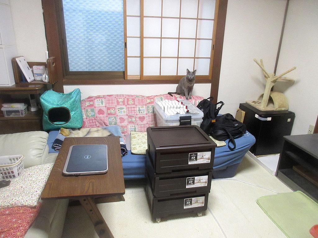 台風に対しての備えを開始。