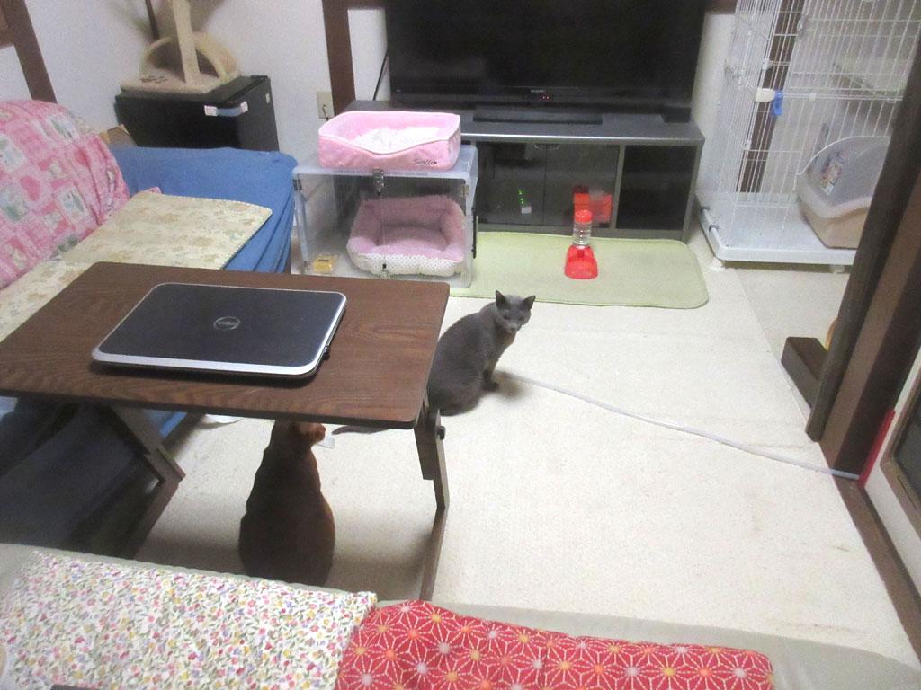 朝から起き出して来た猫たち。