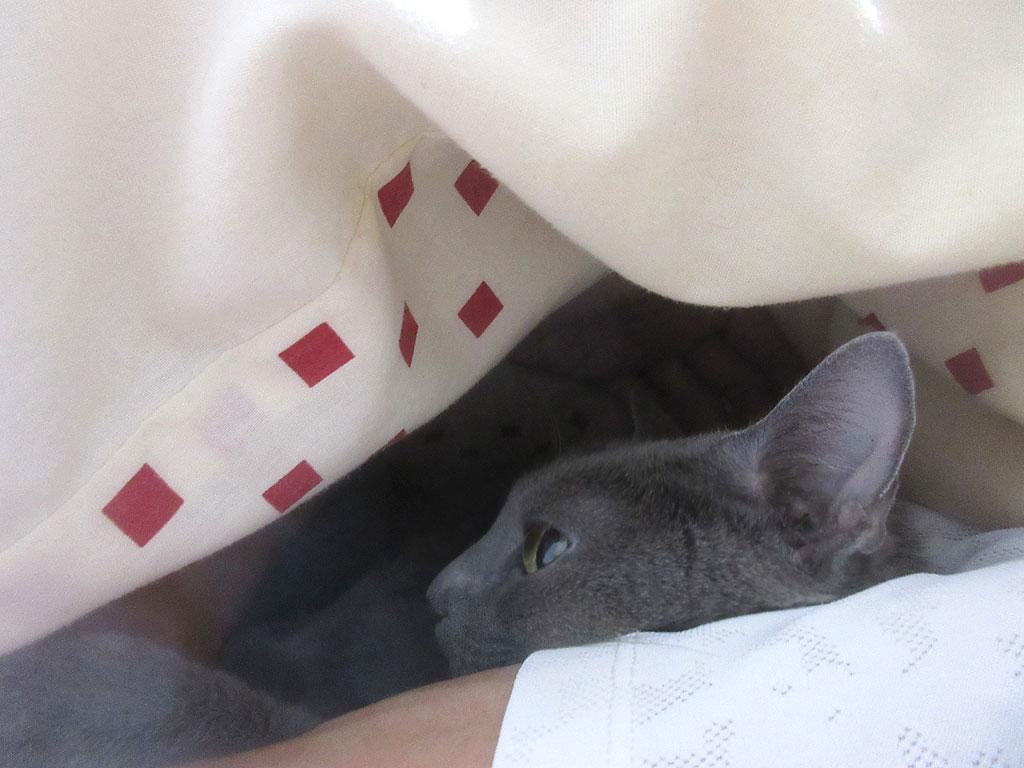 一緒に寝てくれたろロシ子。