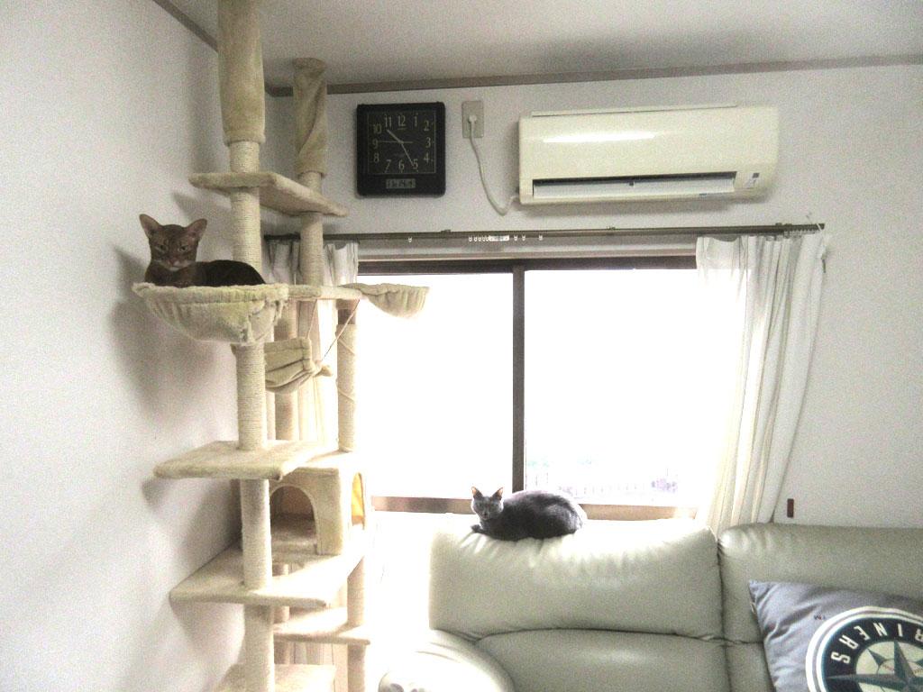 暖房をつけ始めました。