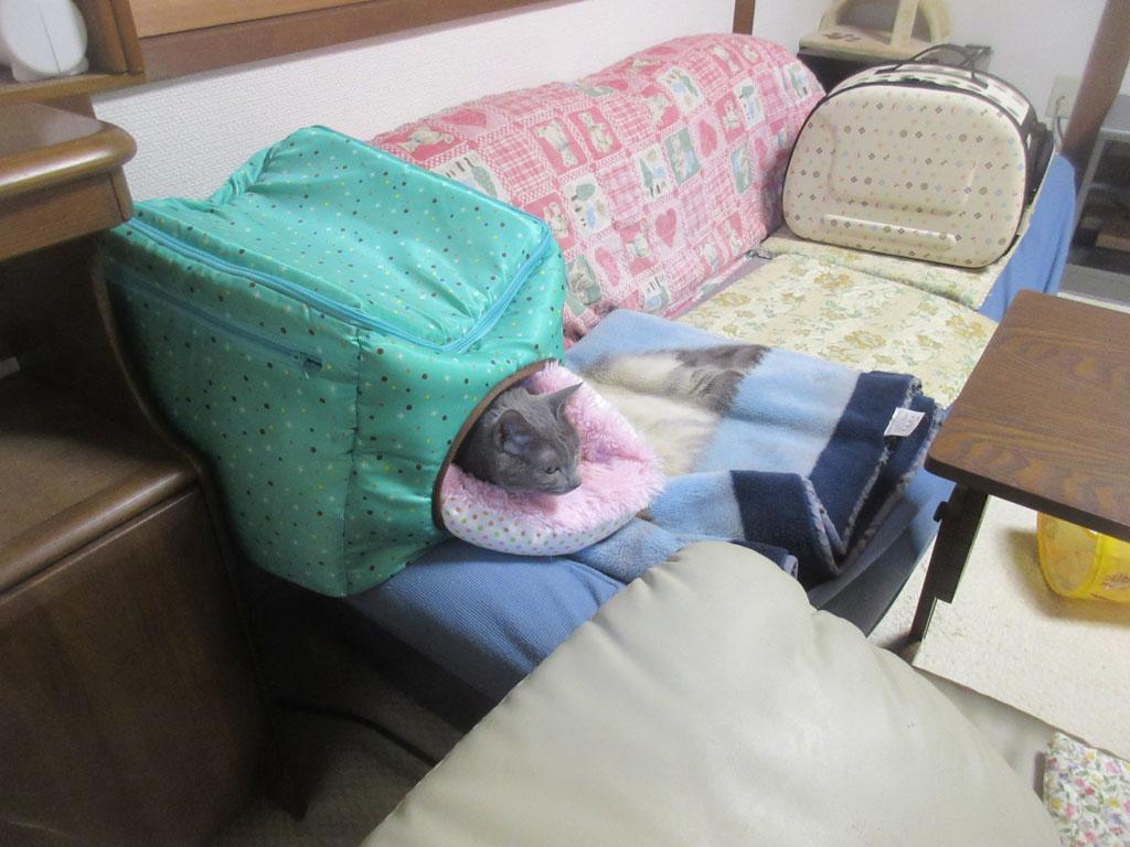 一晩中、ここで寝ていたロシ子ちゃん。