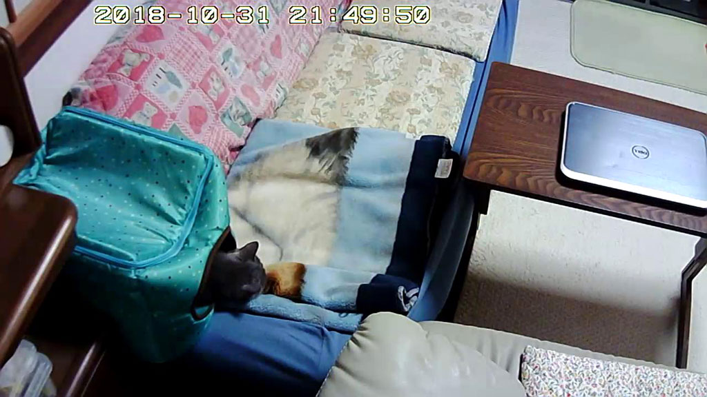 心配させる寝方のロシ子ちゃん。