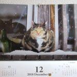 12月のカレンダーの猫ちゃん。