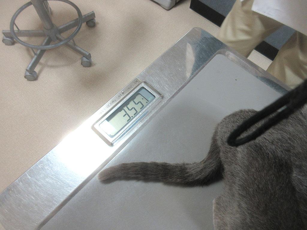 ロシ子の体重は3.55kg。