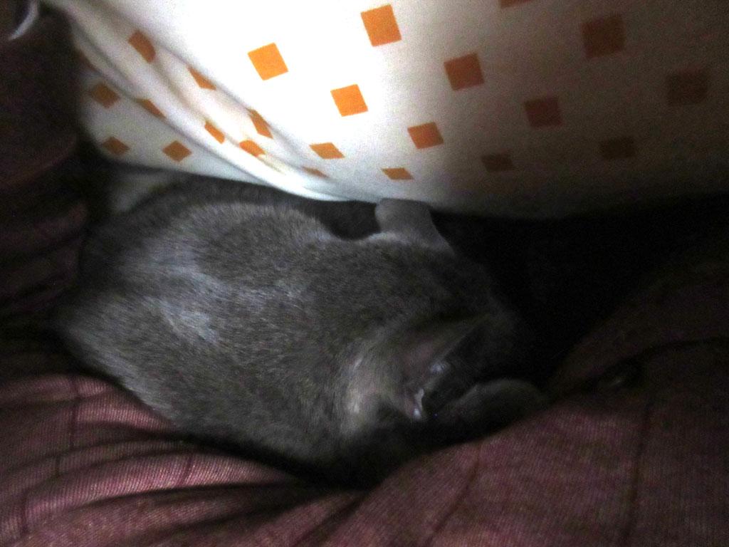 一緒に寝てくれたロシ子。