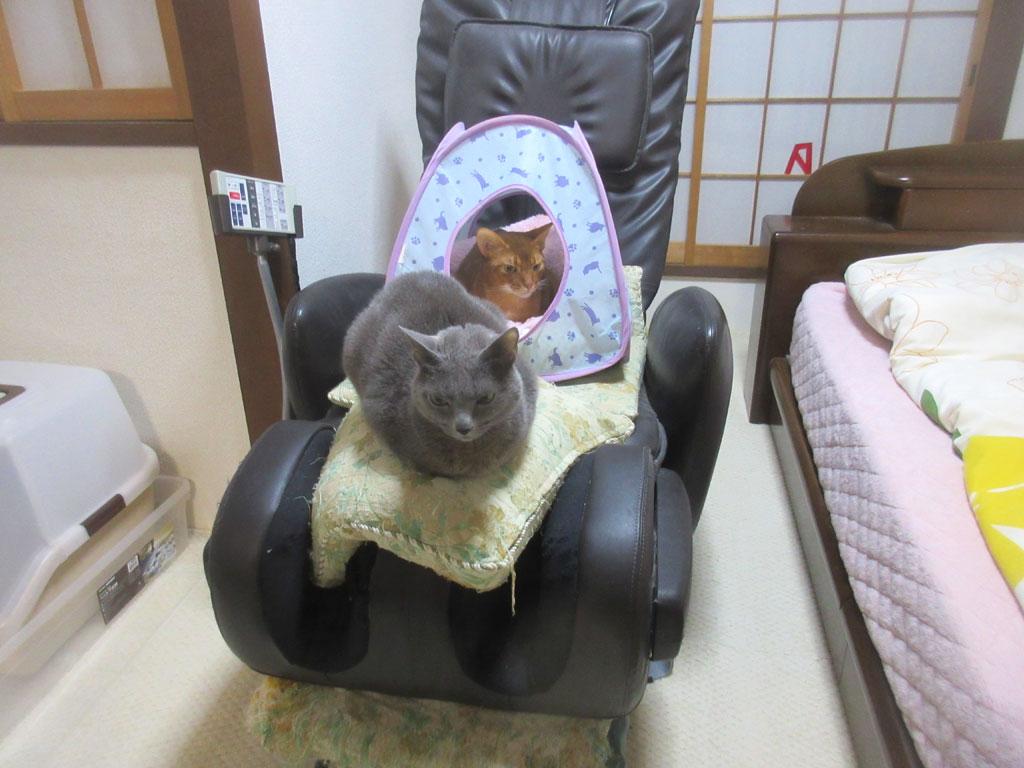 笑えた猫たちの様子。