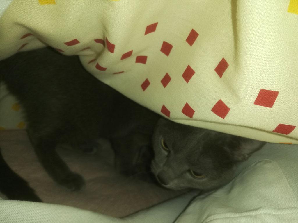 ロシ子が一緒に寝てくれました。