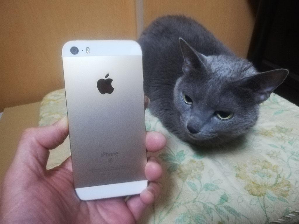 iPhone SEとロシ子。